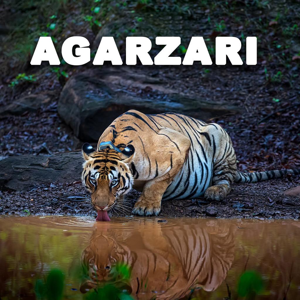 Agarzari