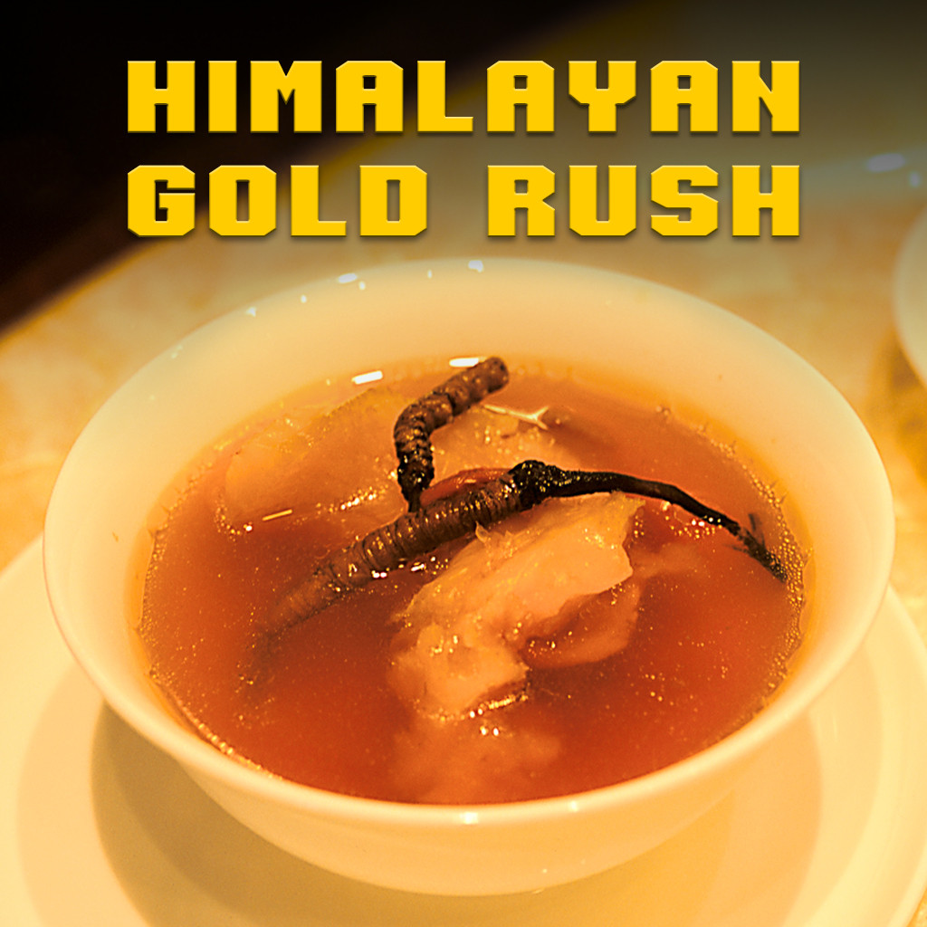 Himalayan Gold Rush