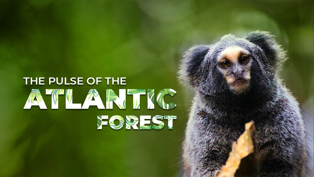 The Pulse of the Atlantic Forest