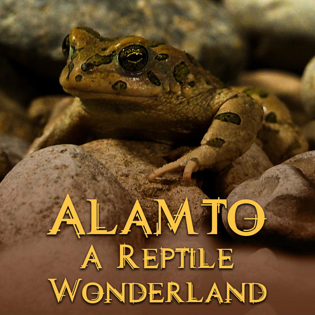 Alamto: A Reptile Wonderland