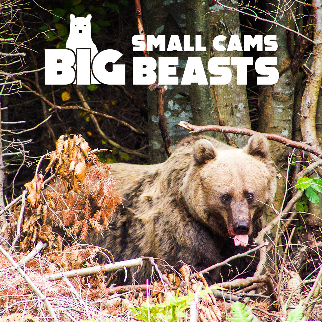 Small Cams, Big Beasts