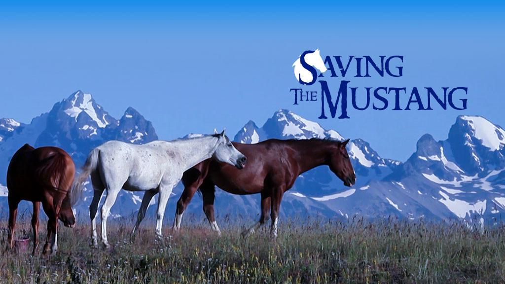 Saving The Mustang