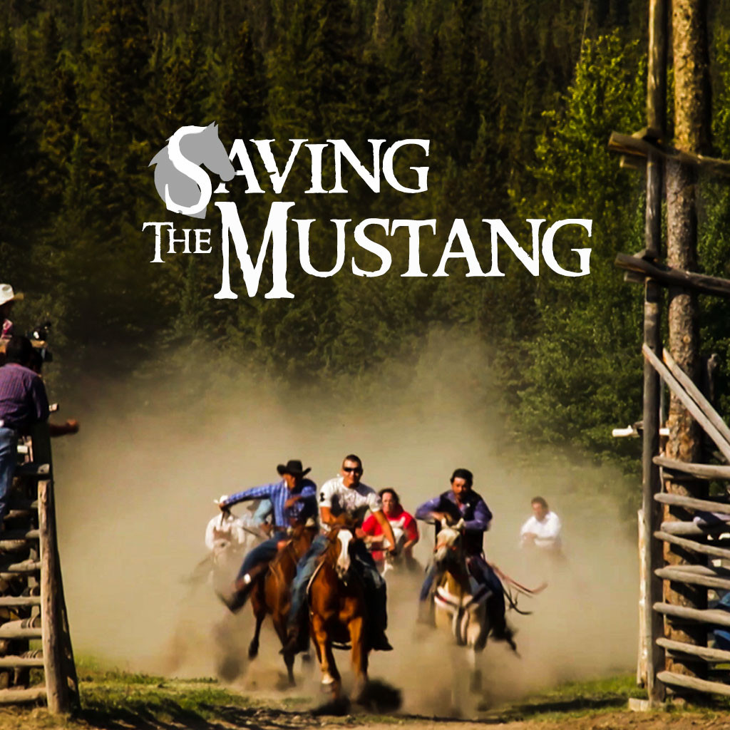 Saving The Mustang