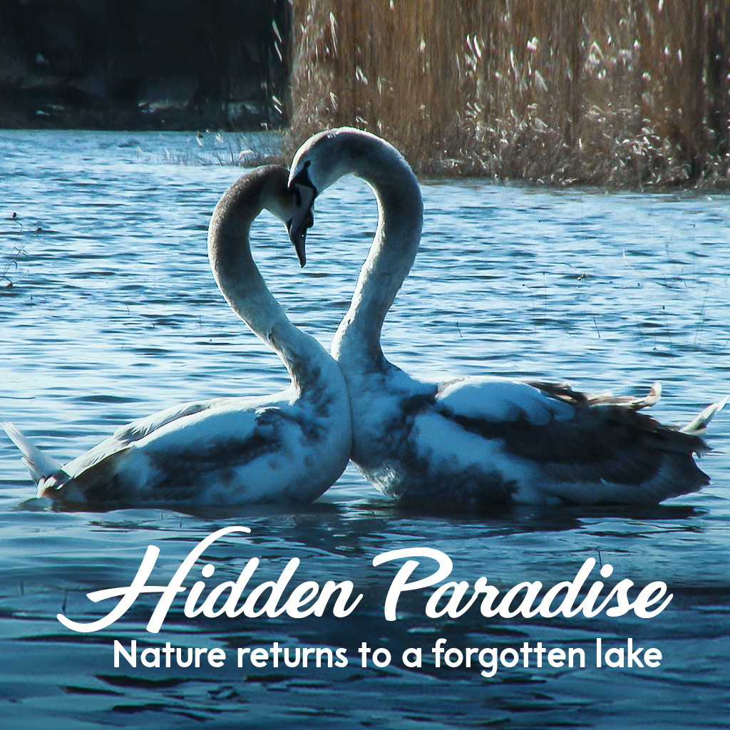 Hidden Paradise: Nature Returns to a Forgotten Lake