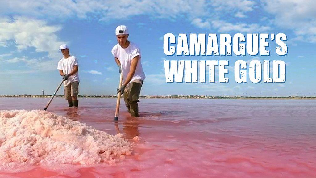 Camargue's White Gold