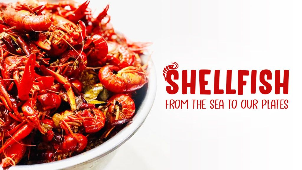Shellfish: From The Sea To Our Plates