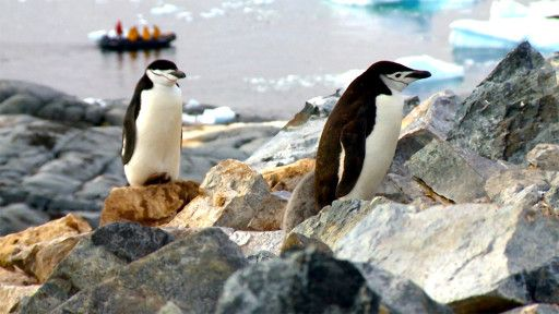 E2. Antarctica
