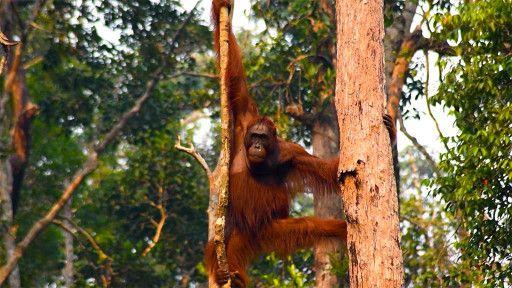 E10. Wild Indonesia